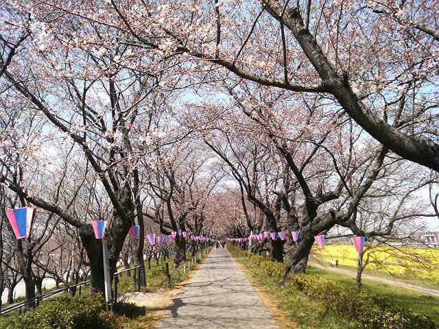 春の名所散策